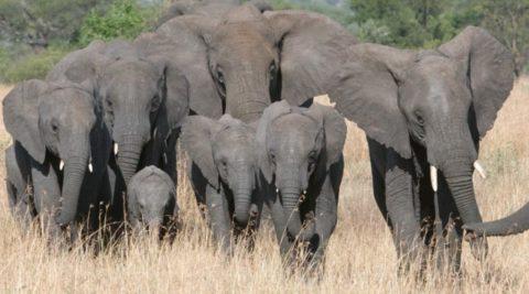 8 Days 7 Nights Tanzania Safari