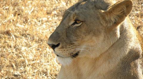 Tanzania 4 Days 3 Nights Safari