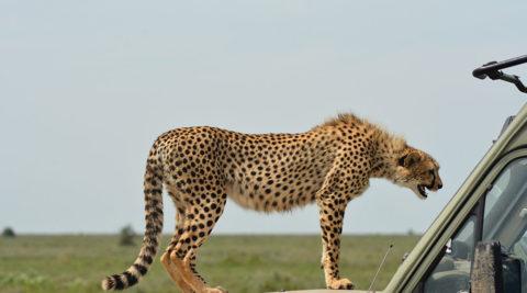 8 Days Tanzania Holidays Safari, Culture&Farm Activities Itinerary