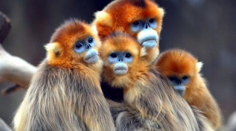 Rwanda Primate Safaris Adventure 9 Days/ 8 nights