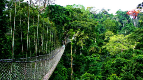The Ultimate Gorilla Experience Rwanda  7 days/6 Nights