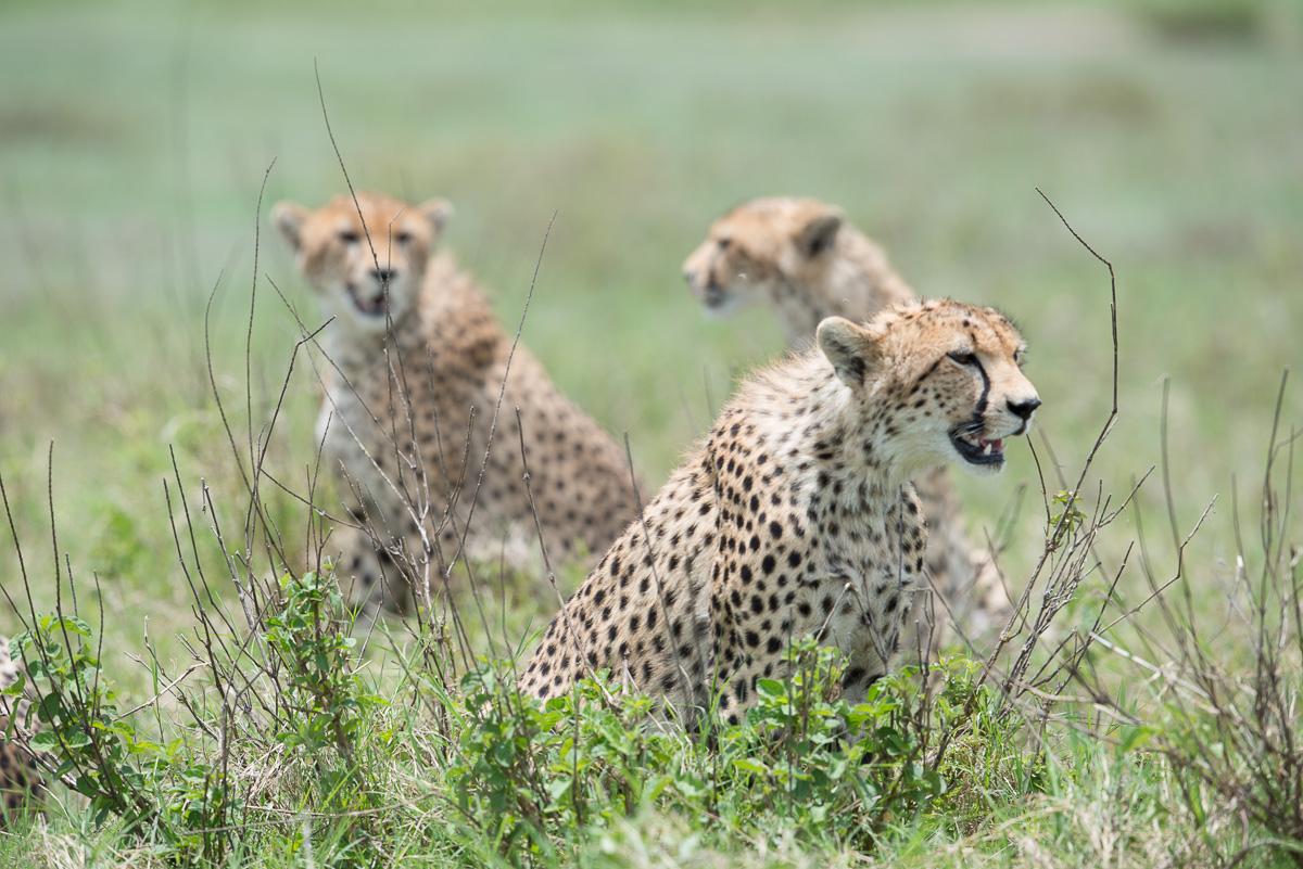 7 Days Kenya Ultimate Safari