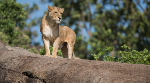 22 Days Tanzania Northern Circuit, Southern Circuit and the coast Safari