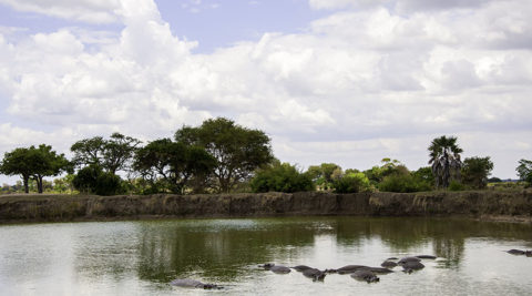 5 Days 4 nights Selous Game Reserve & Mikumi National Park