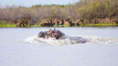 3 Days 2 Nights Selous Game Reserve