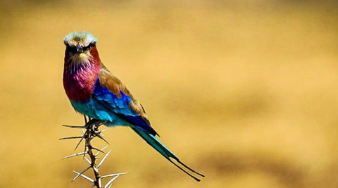 16 Days Tanzania Bird Watching Safari