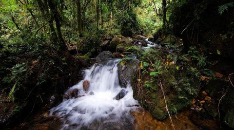 Ultimate Safari Uganda Itinerary 8 Days / 7 Nights
