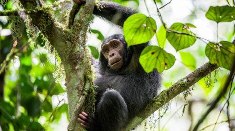 Rwanda Safari Trekking 5 days /4 nights